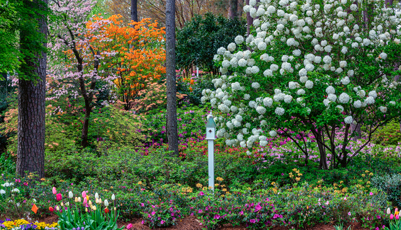 Woodland azalea and flower garden in Raleigh, North Carolina